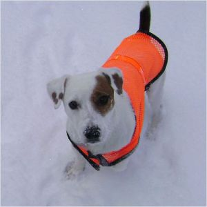 Reflective+Pet+Safety+Vest